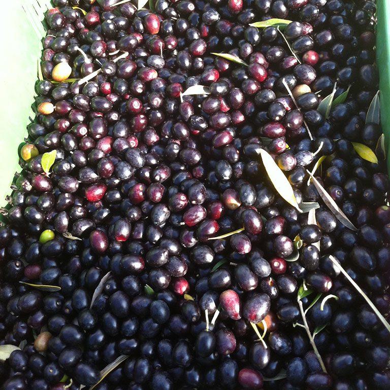 Olive in cassetta